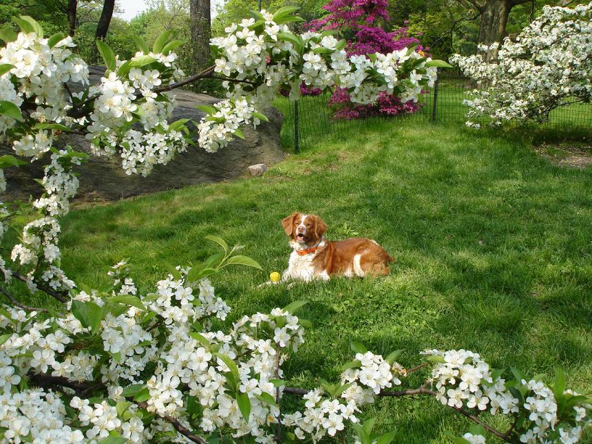 central park spring pictures. Jake - Central Park Spring